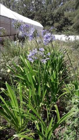 Plantas para parques y jardines ,cercos vivos ,frutales ,forestales etc.