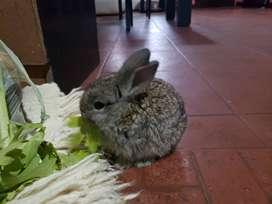 Vendo dos conejos