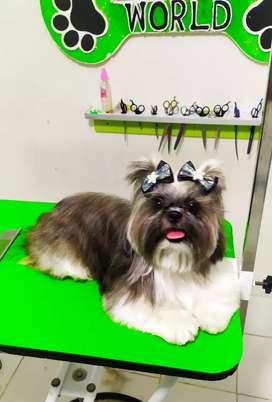 Peluqueria canina Fusagasugá