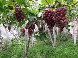 Casa Lote con cultivos en Toro Valle