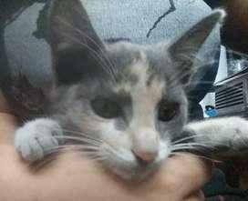 Adopción responsable gatita de 3 meses