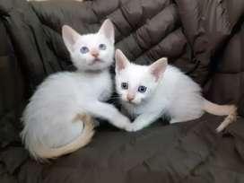 Lindos gaticos disponibles para la entrega