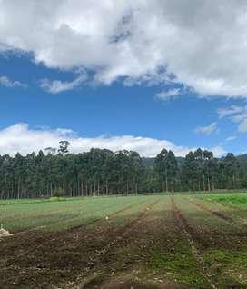 Arriendo lote de 10 fan. en Tibasosa para agricultura con distrito de riego, via pavimentada, equipos e infraestructura