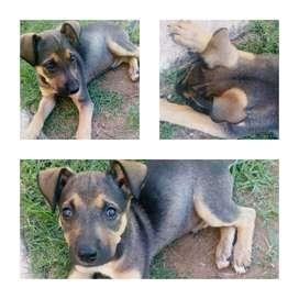 BUSCO CASA perro en adopcion