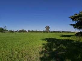Campo 8 hectáreas  Importante ubicación a 60 metros de la nueva autopista