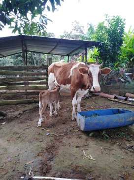Vaca con la ternera