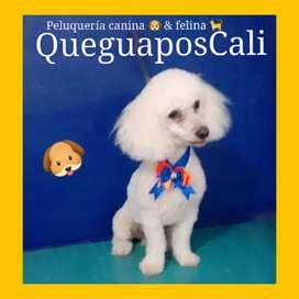 Peluquería canina Cali