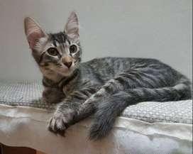 regalo gatitos atigrados