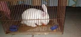 Vendo conejo blanco