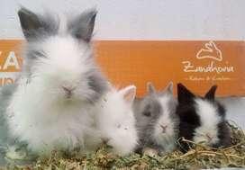 conejos mascota 1 mes