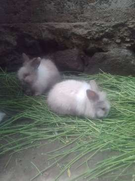 Vendo conejitos peluches