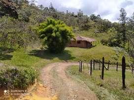 Vendo lotes fincas en el oriente de  Antioquia