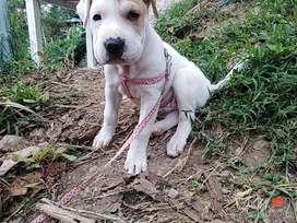 Hermosa cachorrita de 2 meses lista para entregar