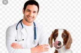 Se Solicita Medico Veterinario
