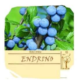 Endrino Prunus Spinosa Bio Semillas Importadas
