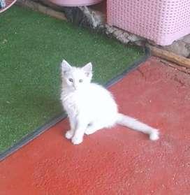Regalo lindo Gatito