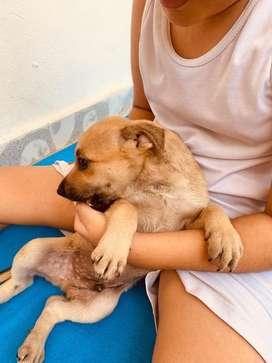 Doy en adopcion a cachorro
