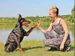 Entrenamiento Canino 100% Eficaz