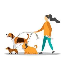 Paseo a tu mascota