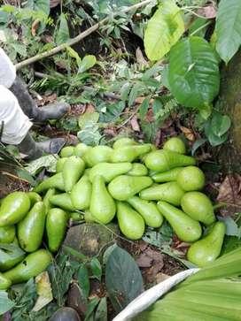 Vendo finca ganadera cacao .