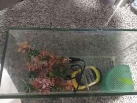 Acuario para peces de 9 litros con bomba, piedras y ramas de decoración .