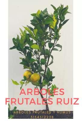 Arboles frutales y humus