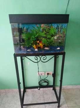 Se vende bello acuario con todos sus accesorios incluye lámpara filtro adornos y su Kit de aseo