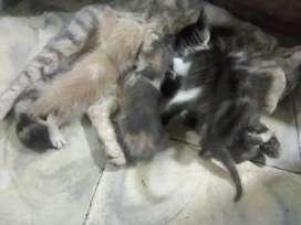 Doy en adopción gatos