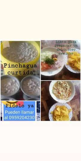Pinchagua curtida