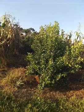 Quinta de 3 hectáreas