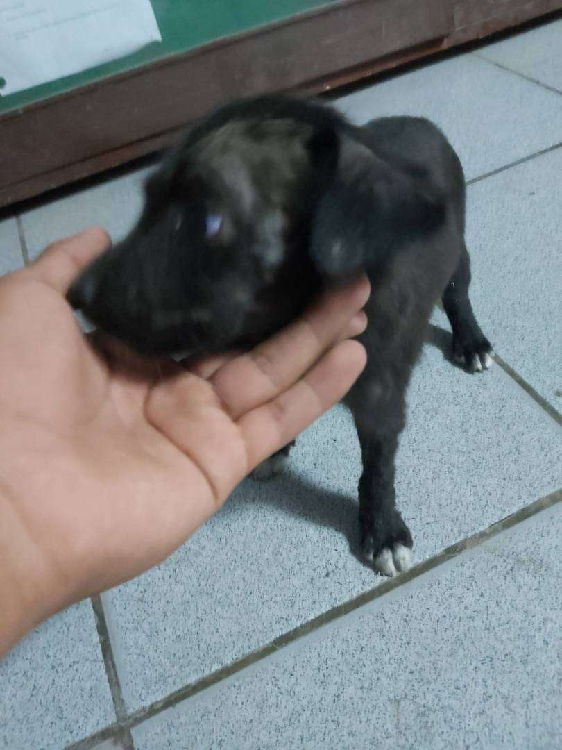 Perrito en adopción 0