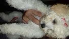 Cachorrita de raza pequeña