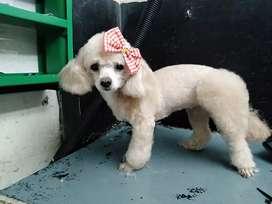 Me ofrezco como estilista canina profecional