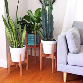 Plantas de Todo Tipo