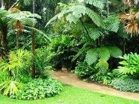 Semillas y plantas tropicales: forrajeras, ornamentales, acuarios, etc