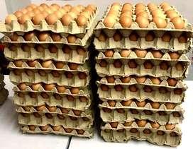 Huevos B, A, AA, Extra. Productores Directos. mayor