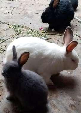 Pareja de conejitos