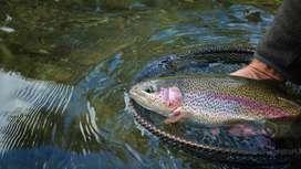 Cultivo de peces y plantas orgánicas para fincas, asesoría integral en producción de trucha y tilapia