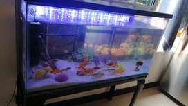 Vendo acuarios con peces filtro lámpara y accesorios