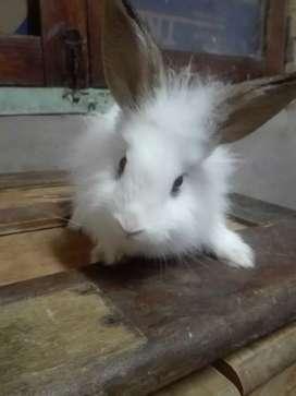 Conejos de tres meses