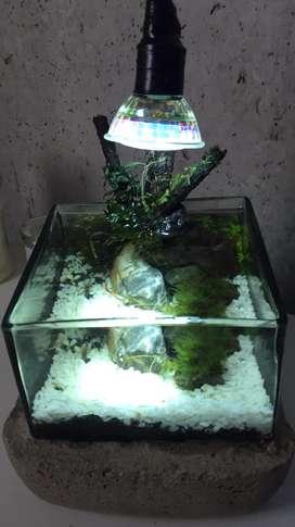 Se hacen acuarios plantados grandes y pequeños