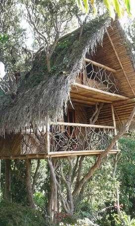 Bambú y construimos cabañas