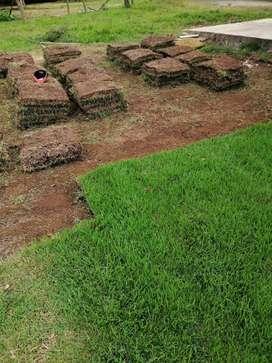 Suministramos grama natural al por mayor