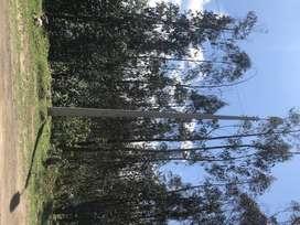 Vendo hermoso Terreno La Merced