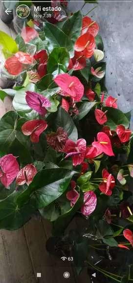 Hermosas plantas para tu jardín