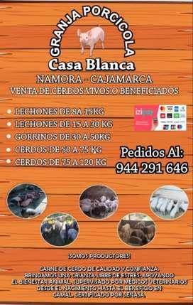 VENTA DE LECHONES Y CERDOS - GRANJA CASA BLANCA