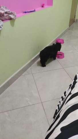Perro minny toy