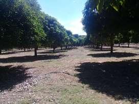 Vendo finca de 26 hectáreas
