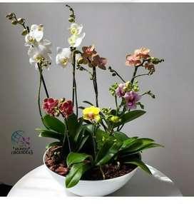 Mata de Orquídeas