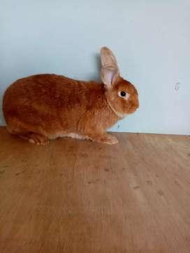 Granja de conejos mi ranchito